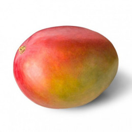 Mango 1vnt