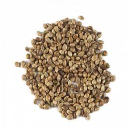 Kanapių sėklos