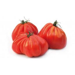 Pomidorai (briaunuoti)